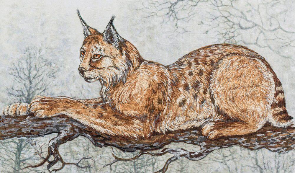 Рисунки рыси в карандаше